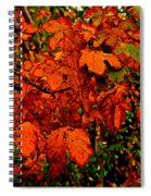 Where Has All The Red Gone - Autumn Leaves - Orange Spiral Notebook