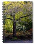 Where Peace Abides Spiral Notebook