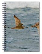 Whimbrel Trio In Flight Spiral Notebook