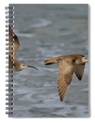 Whimbrels Flying Above Beach Spiral Notebook