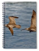 Whimbrels Flying Close Spiral Notebook