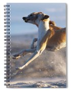 Whippet Dogs Fighting Spiral Notebook