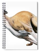 Whippet In The Wind Spiral Notebook