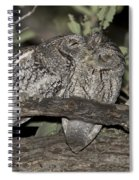 Whiskered Screech Owls Spiral Notebook