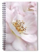 Whispers Of Pink Roses Spiral Notebook