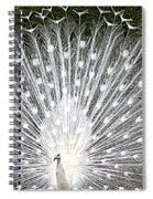 Whit Peacock Spiral Notebook