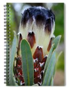 White And Brown Protea  Spiral Notebook