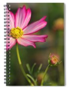 White And Magenta Cosmos Spiral Notebook
