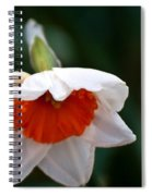 White And Orange Daffodil Spiral Notebook