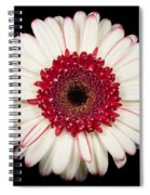 White And Red Gerbera Daisy Spiral Notebook