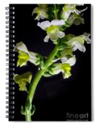 White And Yellow Snapdragons Spiral Notebook