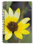 White And Yellow Sunflower Spiral Notebook