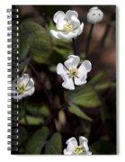 White Anemone Flowers Spiral Notebook