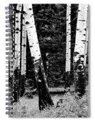 White Bark Aspen Bw Spiral Notebook