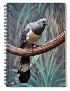 White-bellied Go-away-bird Spiral Notebook