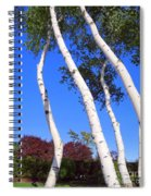 White Birch Blue Sky Spiral Notebook
