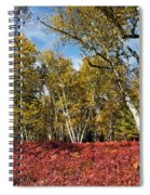 White Birches Of Fall Spiral Notebook