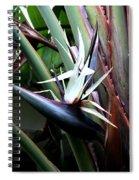 White Bird Of Paradise Spiral Notebook