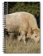 White Bison Symbol Of Hope And Renewal Spiral Notebook