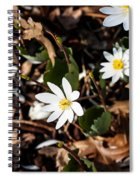 White Bloodroot Spiral Notebook
