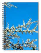 White Blossoms Blue Sky Spiral Notebook