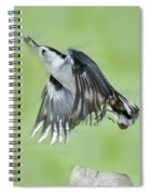 White-breasted Nuthatch Flying With Food Spiral Notebook