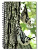 White Breasted Nuthatches Spiral Notebook