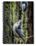 White Breasted Nuthatchs Spiral Notebook
