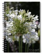 White Bright Agapanthus Spiral Notebook