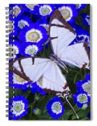 White Butterfly On Blue Cineraria Spiral Notebook