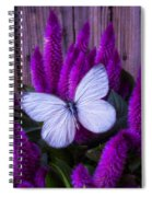 White Butterfly On Flowering Celosia Spiral Notebook