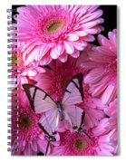 White Butterfly On Pink Gerbera Daisies Spiral Notebook