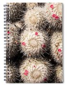 White Cactus Pink Flowers No1 Spiral Notebook