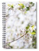 White Cherry Blossom Flowers  Spiral Notebook