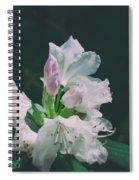 White Cloud Azalea  By Zina Zinchik Spiral Notebook