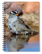 White-crowned Sparrow Bathing Spiral Notebook