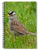 White Crowned Sparrow Spiral Notebook