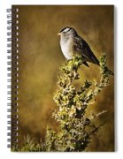 White-crowned Sparrow Spiral Notebook