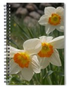 White Daffies Spiral Notebook