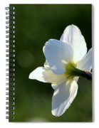 White Daffodil Rear Profile Spiral Notebook