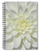 White Dahlia Square Spiral Notebook