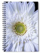 White Daisy Close Up Spiral Notebook
