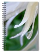 White Daisy Petals Raindrops Spiral Notebook