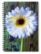 White Daisy With Green Wall Spiral Notebook