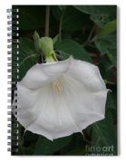 White Datura Spiral Notebook