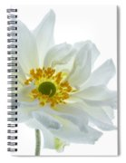 White Double Japanese Anemone Spiral Notebook
