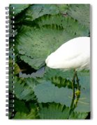 White Egret On Lilypads Spiral Notebook