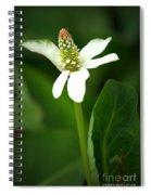 White Elegance Spiral Notebook
