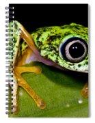 White-eyed Leaf Frog Spiral Notebook
