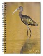 White Faced Ibis Spiral Notebook